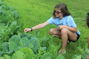 Garden Warrior Astrid Clem pictured here working with collard greens at the DWH Farm.